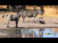 Welcome to Botswana: Makgadikgadi