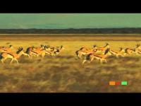 Welcome to Botswana: Central Kalahari Game Reserve